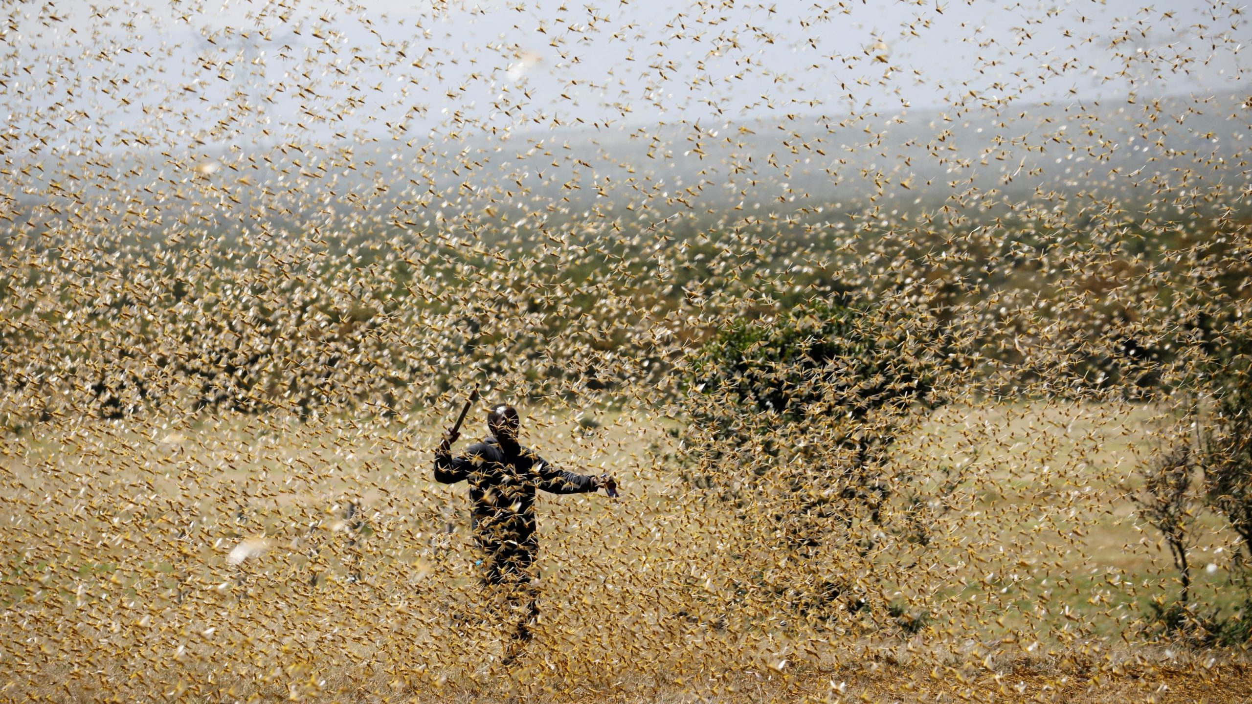 Two new generations of locusts are set to descend on East Africa again—400 times stronger – Quartz (image)
